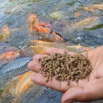 training tentang Pakan Ikan