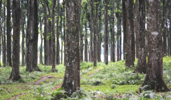 TRAINING PENGELOLAAN HCVF (HIGH CONSERVATION VALUE FOREST) SFM FSC